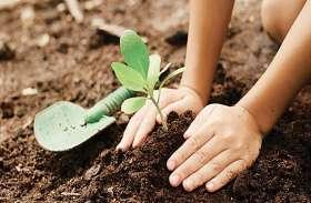 वनविहीन जिले में 5 साल में रोपे 29 लाख पौधे फिर भी नहीं आई हरियाली, सबक लेने की बजाय फिर ढर्रे पर पौधरोपण की तैयारी