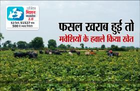 सरकारी बीज से मूंग की फसल चौपट, मवेशियों के हवाले किया खेत