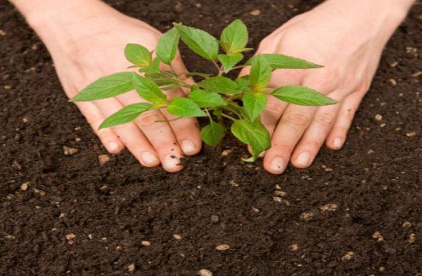 स्वयंसेवकों ने लीलामृत वाटिका में रोपे पौधे