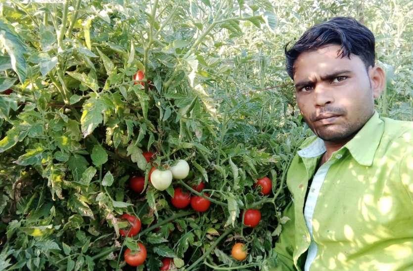 #मिशन मध्यप्रदेश-2.0#आधा बीघा में टमाटर की खेती से कमाए एक लाख रुपए