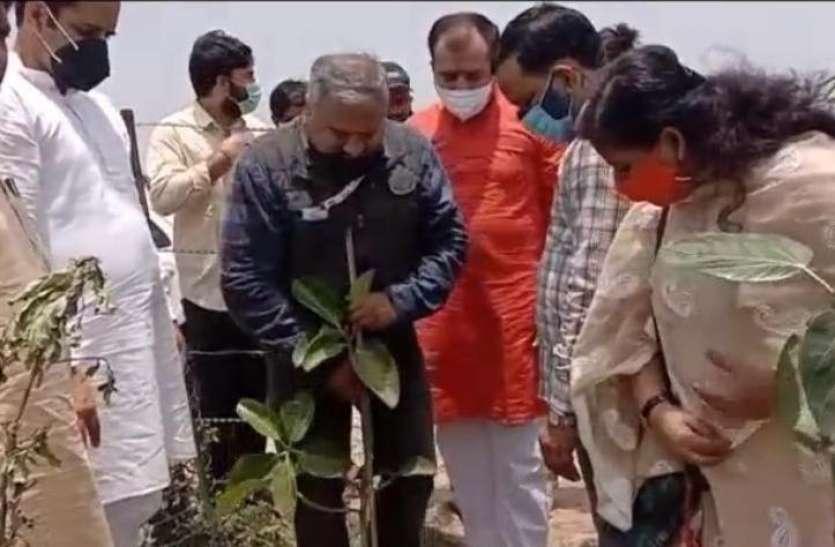 हिंडन के डूब क्षेत्र में लहलहाएंगे 65 हज़ार पेड़,15 एकड़ जमीन पर तैयार होगा नया 'जंगल'