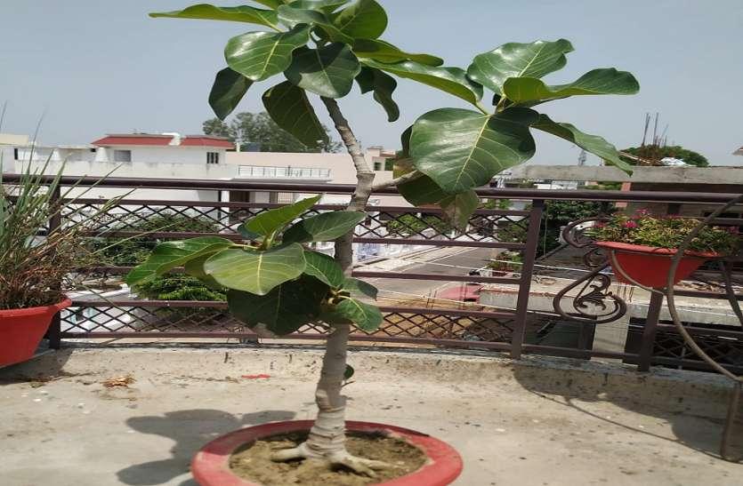 वट सावित्री व्रत के अवसर अयोध्या में बरगद का पौधा रोपित करेंगे सुहागिने