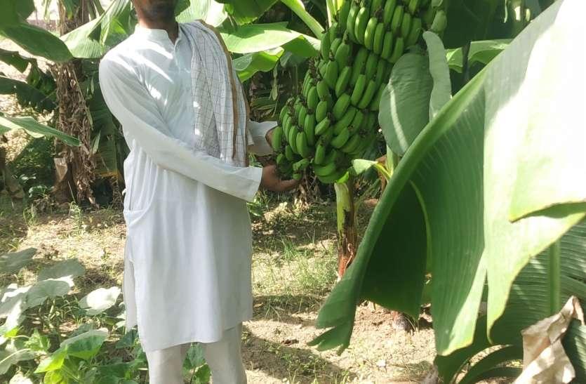 फलों की पैदावार में बढ़ रहा रुझान