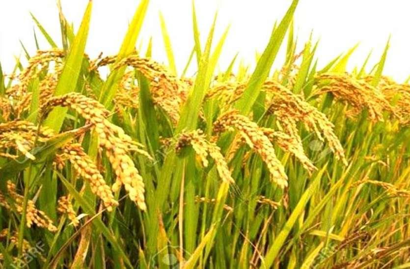 हनुमानगढ़: कृषि निर्यात प्रोत्साहन योजना के प्रति किसान व व्यापारी दिखा रहे उत्साह, क्रियान्वयन को लेकर कल होगी बैठक