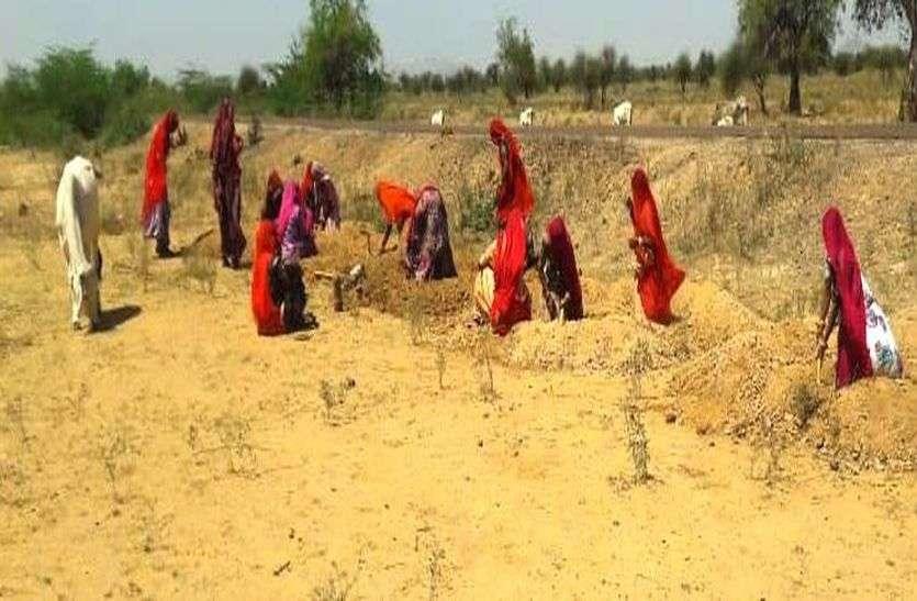 मनरेगा श्रमिक नियोजन में बाड़मेर प्रदेश में अव्वल