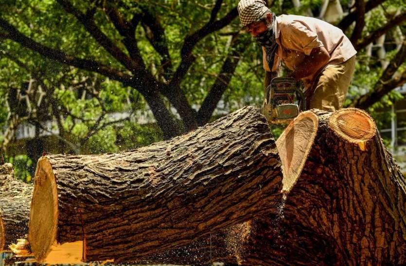 महाराष्ट्र: 50 वर्ष या उससे अधिक आयु वाले वृक्षों को मिलेगा विरासत का दर्जा