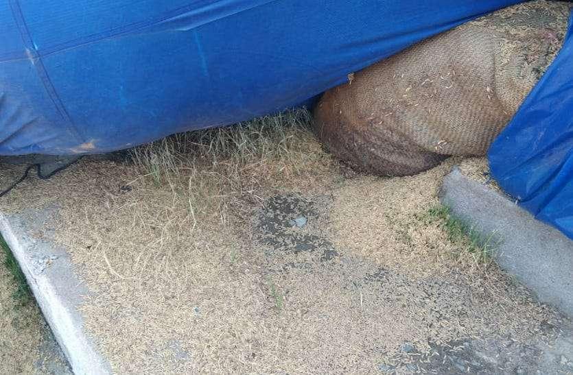Big negligence in paddy storage