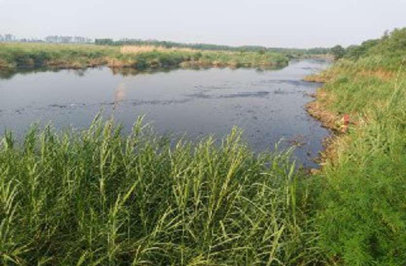 पंजाब से नहरों में आ रहा दूषित पानी,यहां की लैब ने सही बताया,अब हैवी मैटल की जांच जयपुर से होगी