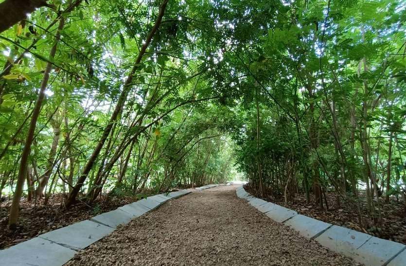 अहमदाबाद महानगर में मिनी वन का एहसास करा रहा 'उगती ऑक्सीजन पार्क'