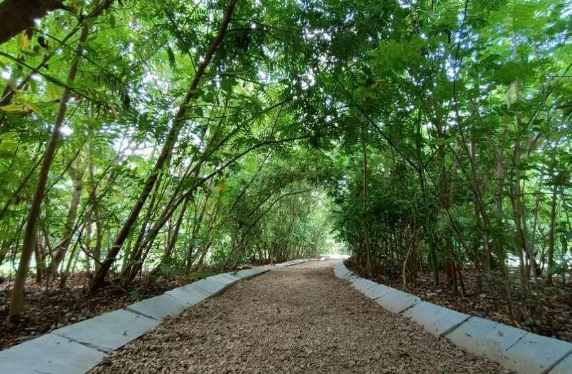 अहमदाबाद महानगर में मिनी वन का एहसास करा रहा उगती ऑक्सीजन पार्क