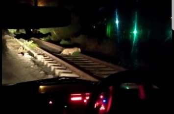 नेपा में फिर तेंदुए की चहल कदमी, कैमरे में किया कैद
