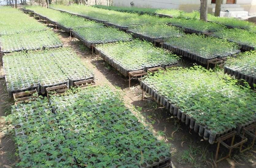दानह : 300 हैक्टेयर में पौधरोपण का लक्ष्य