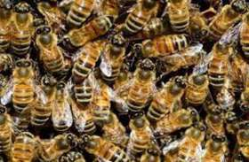 मधुमक्खियों ने मां और गोद में रही बेटी पर अचानक किया हमला, मासूम की मौत