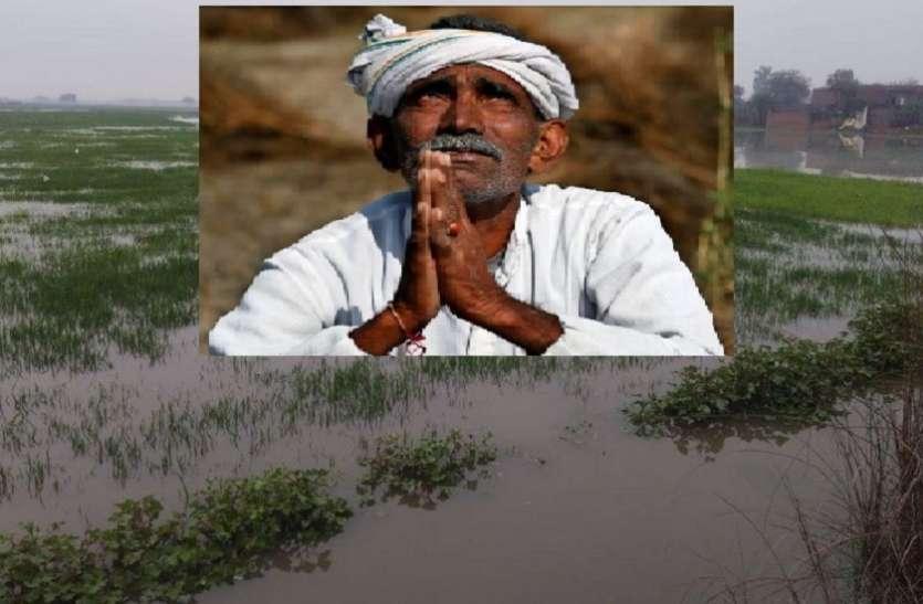 बारिश से मूंग फसल के बर्बाद होने का अंदेशा, किसान चिंतित