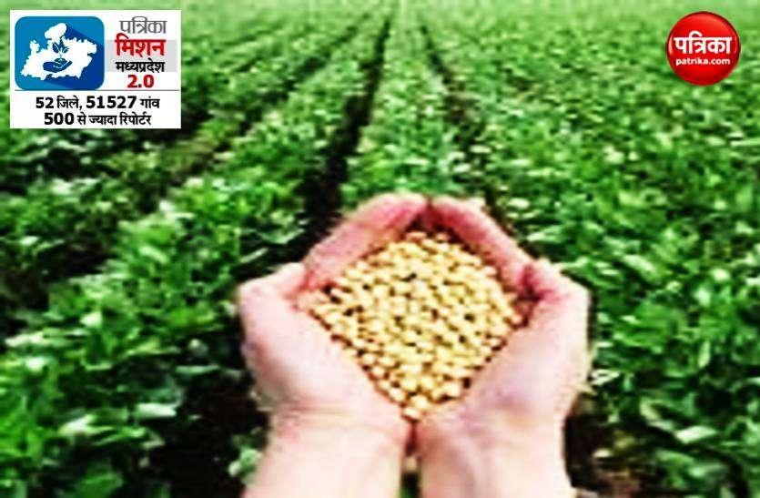 प्रदेश में इन सोयाबीन किस्मों से किसानों को होगा फायदा, जानें कोनसी है ...
