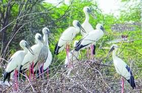 प्रवासी पक्षियों की चहचहाहट से गूंज