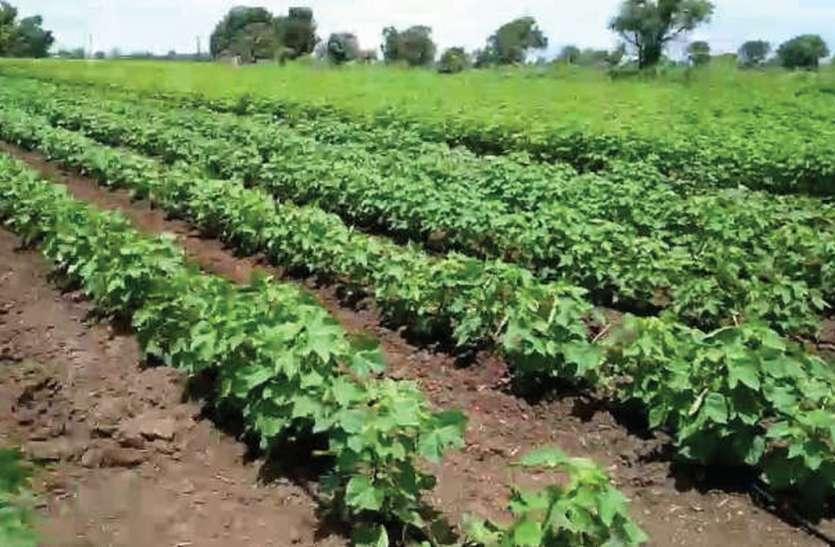 किसान अड़े तो हुकूमत को समझ में आई बीमा कंपनियों की पैंतरेबाजी