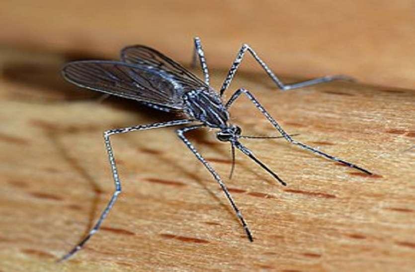 कोरोना को हराया, अब मलेरिया मिटाने की मुहिम
