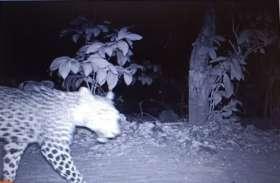 लॉकडाउन में मानवीय दखल घटा तो बढ़े वन्य जीव