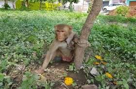 बंदरों को बंधक बनाने वालों पर होगी कार्रवाई