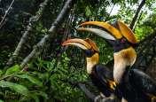 BIRDS : जानिए, कितने परिंदे हैं धरती पर