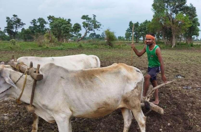 खेतों में पसीना बहा रहे किसान
