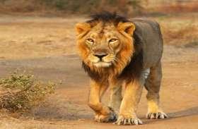 चेन्नई के चिडियाघर में चार शेरों में मिला खतरनाक डेल्टा वैरिएंट, 2 शेरों की मौत