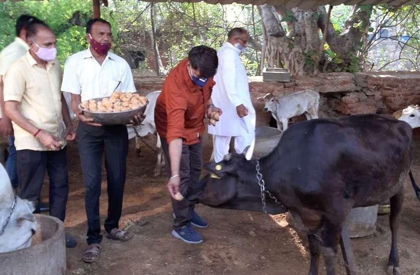 BJP MLA Ramlal Sharma : 'ना केक- ना मिठाई- ना साफा', गौसेवा को समर्पित किया जन्मदिन