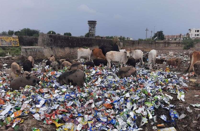 कचरे में से प्लास्टिक पैकेट खा रहे आवारा पशु