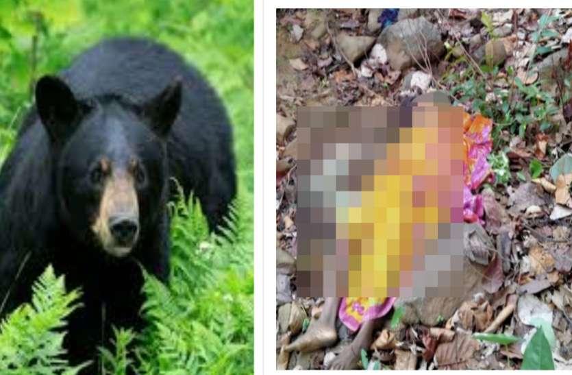 जान बचाने पेड़ पर चढ़ गई महिला लेकिन भालुओं ने खींचकर नीचे उतारा और मार डाला
