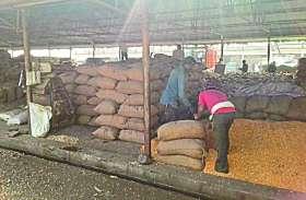 Farmers upset: आवक कम हो या ज्यादा, किसानों को मंडी शेड में नहीं मिलती जगह