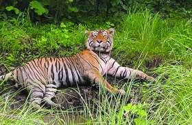 वनमंत्री ने कोटा में कहा - जल्द लाएंगे मुकुंदरा हिल्स टाइगर रिजर्व में बाघ