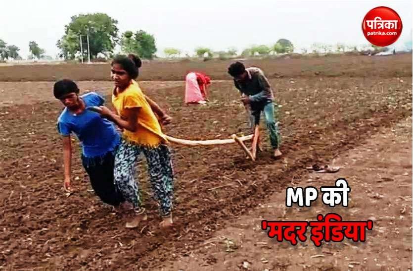 MP की 'मदर इंडिया': भाई ने चलाया हल बहनों को बनना पड़ा बैल