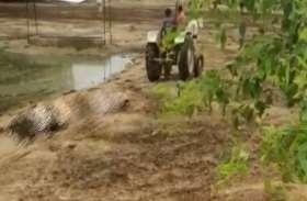 Ayodhya : मृत गोवंशों को ट्रैक्टर से खींचने पर ग्राम विकास अधिकारी हुए सस्पेंड, दो अधिकारियों को नोटिस