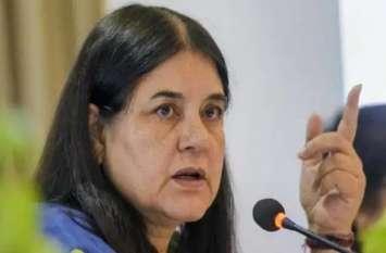 BJP सांसद मेनका गांधी के खिलाफ जबलपुर में Veterinary Doctors का जोरदार हंगामा