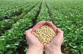 खेतों में डलेगा 630 करोड़ रुपए का सोयाबीन का बीज