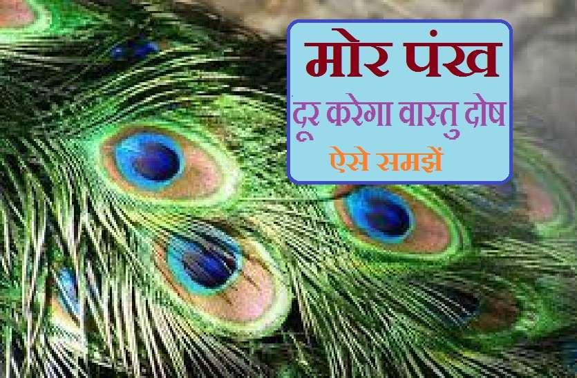 Vastu Tips: मोरपंख, जो दूर करता है घर का हर वास्तु दोष!