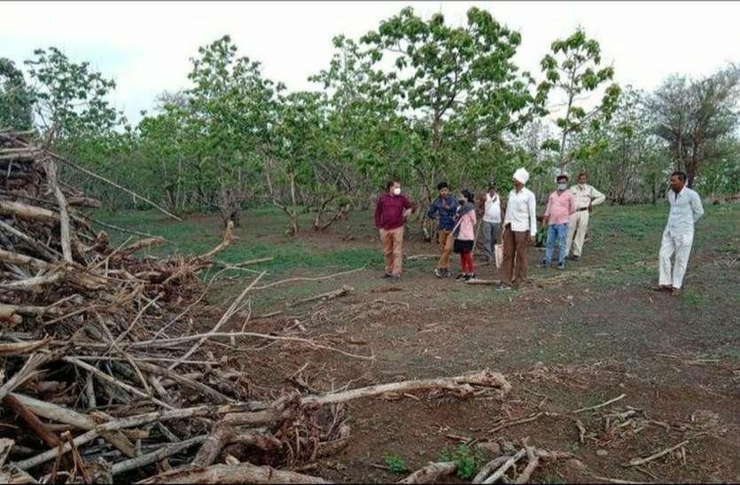वन विभाग लकडी के टालों की ऑन लाइन करेगा नीलामी