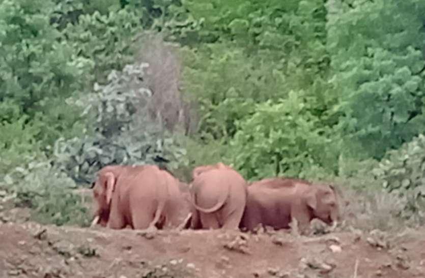 छत्तीसगढ-मप्र की सीमा पर हाथियों ने जमाया डेरा, आधा दर्जन गांवों पर विभाग की निगरानी