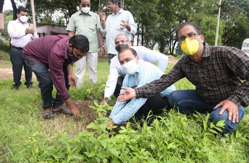 जीवन रक्षा के लिए बहुत जरूरी है पौधे लगाना, पेड़ बचाना
