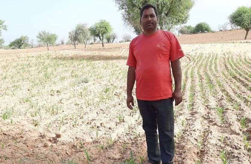 किसानों को बारिश की आस, वरना हो सकता है नुकसान