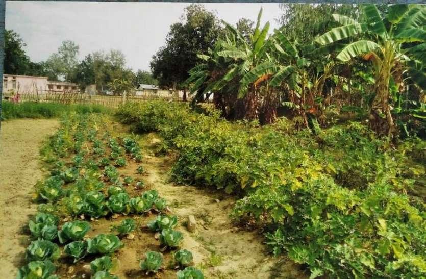 301 सरकारी स्कूलों में किचन गार्डन, 718 स्कूलों में चल रही तैयारी
