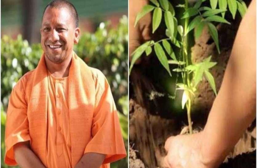 UP Plantation Campaign: यूपी सरकार वृक्षारोपण का बनाएगी नया रिकॉर्ड, इस तरह की गई है पूरी प्लानिंग