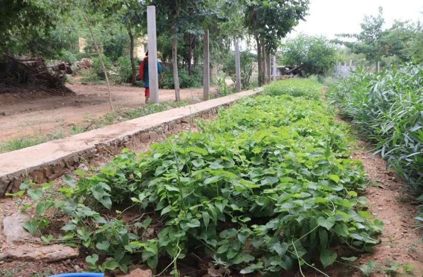 जिले में औषधीय पौधे बनाएंगे सेहत