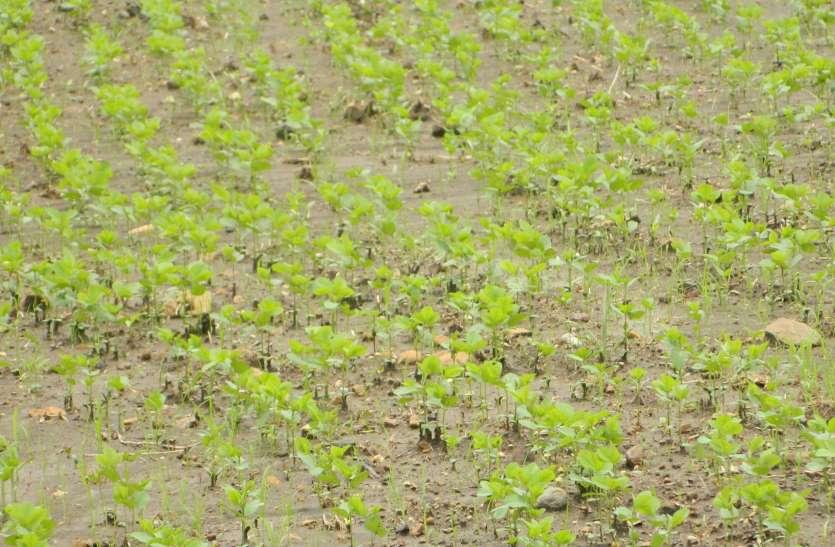 अच्छी बारिश के लिए इंद्र देव को मनाने किसानों ने किया हवन