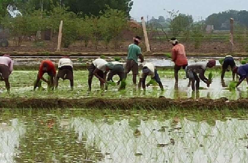 जिले में बारिश की आस में बैठे किसानों को तरसा रहे बादल