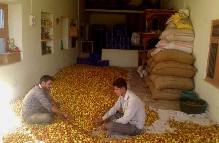 नागौर में बागवानी का क्रेज : किसान जाग गए, अब आप जागो सरकार