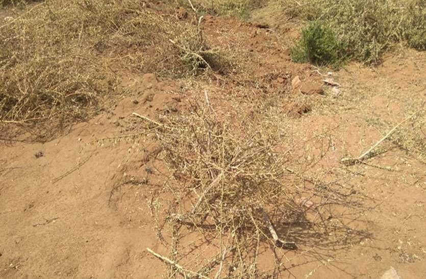 वन विभाग की भूमि से ग्रामीणों ने उखाड़ दिए पेड़-पौधे, अब करेंगे पैमाइश