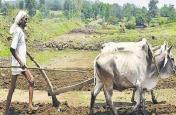 अगस्त में आएगी पीएम किसान की 9वीं किश्त, ऐसे चेक करें अपना बैलेंस