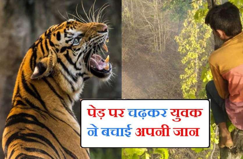 Tiger Attack : बाघ ने दो युवकों को बनाया निवाला तो जान बचाने के लिए पेड़ पर चढ़ा तीसरा युवक, बोला- दहशत में काटी पूरी रात
